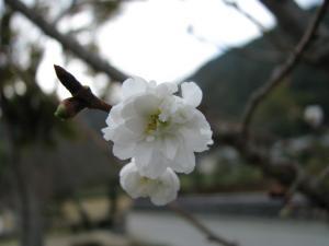 08.11.16 吉香公園 2 007