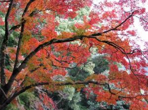 08.11.16 吉香公園 2 047