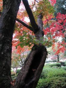 08.11.16 吉香公園 2 053