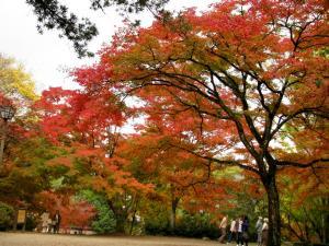 08.11.16 吉香公園 2 074