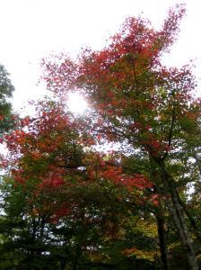 IMG_hibayama1626.jpg