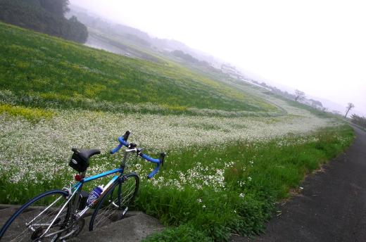 2010416kikuchigawa.jpg