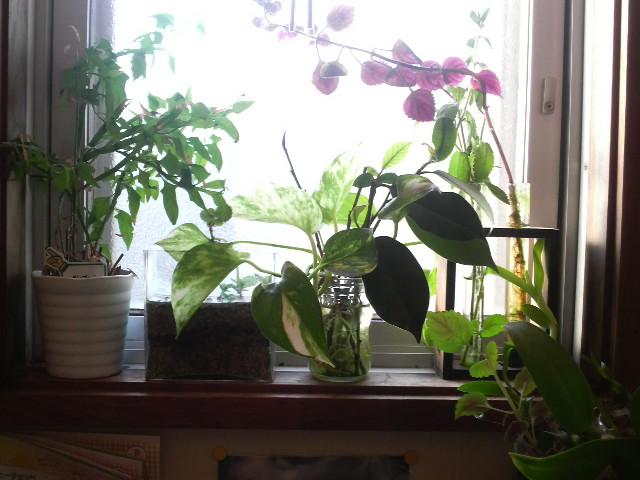 トイレの植物たち