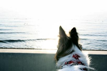 ペット博と幕張と海と・・・♪14