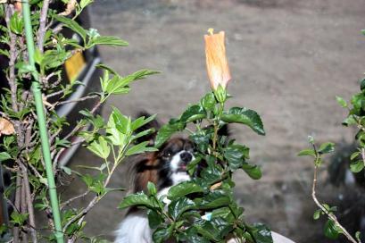 オヤツが咲いたよww♪4