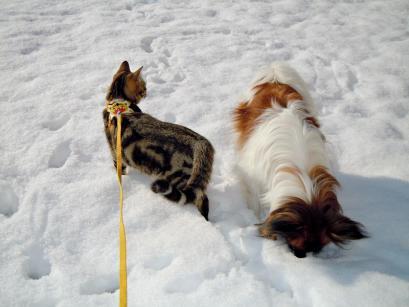 雪の上でワンニャフル♪5
