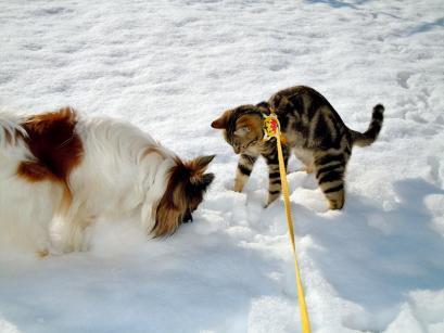 雪の上でワンニャフル♪4