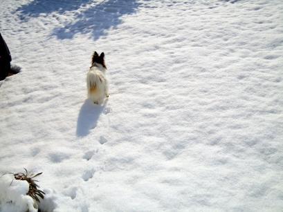 雪の上でワンニャフル♪1