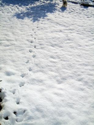 雪の上でワンニャフル♪2