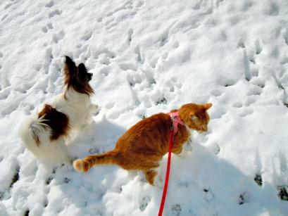 雪の上でワンニャフル♪7