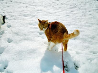 雪の上でワンニャフル♪8