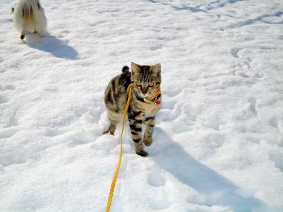 雪の上でワンニャフル♪6