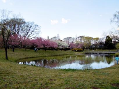 「桃まつり」は中止でも花桃は咲いてるもんね!3