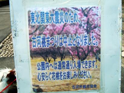 「桃まつり」は中止でも花桃は咲いてるもんね!1