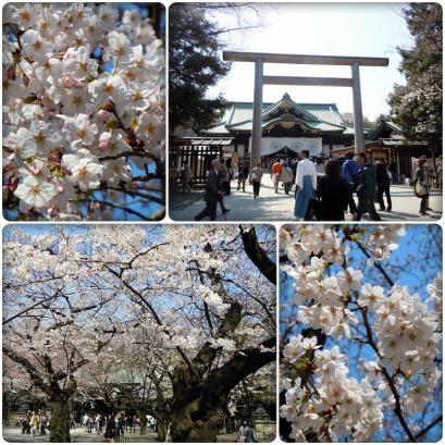 満開の桜と入学式5