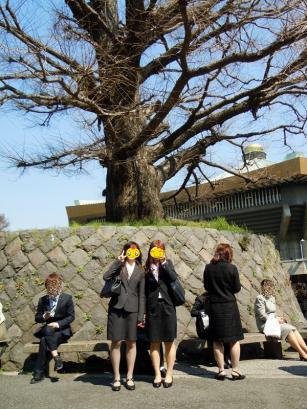 満開の桜と入学式3