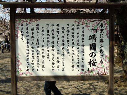 満開の桜と入学式6