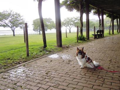 雨・・・><2