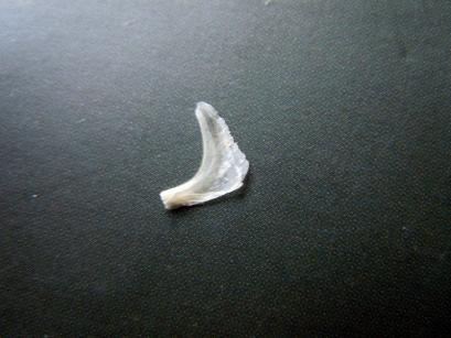 爪のカケラ1