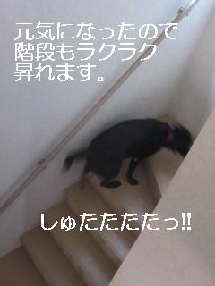 IMG_0527しゅたた