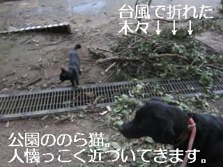 IMG_0534野良