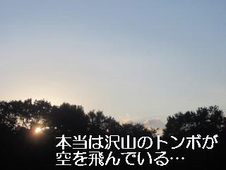 IMG_0647トンボ