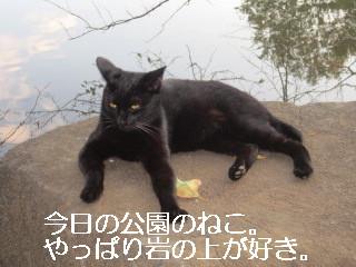 IMG_0646ねこねこ