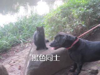 IMG_0834黒黒