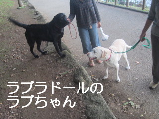 IMG_0835らぶちゃん