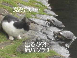IMG_0871猫パンチ