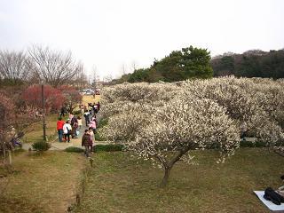 kosigaya222-01