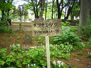tatunamisou-saitama203