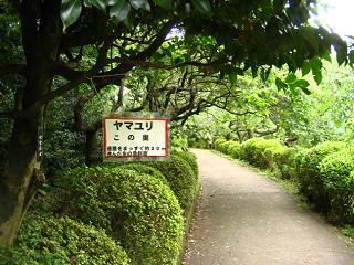 yamayuri-202