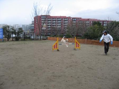 昭和記念公園 アジ