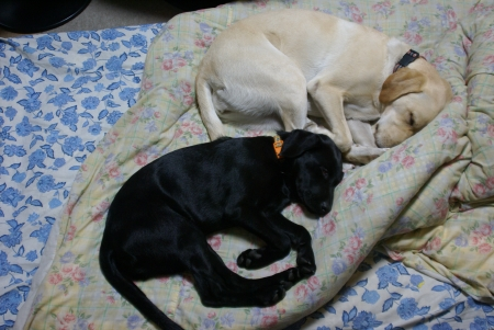 姉妹 昼寝