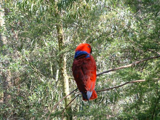 Melbourne zoo 6