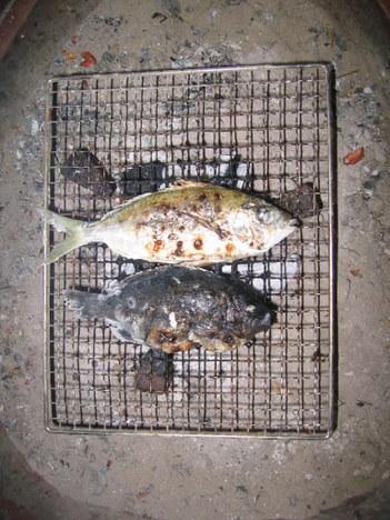 畑の網張り・魚料理の数々 011