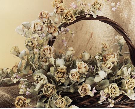 ビロードのバラ2