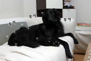 テカテカ(1)