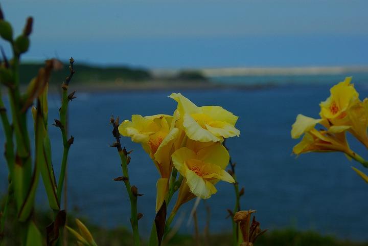 海と花00