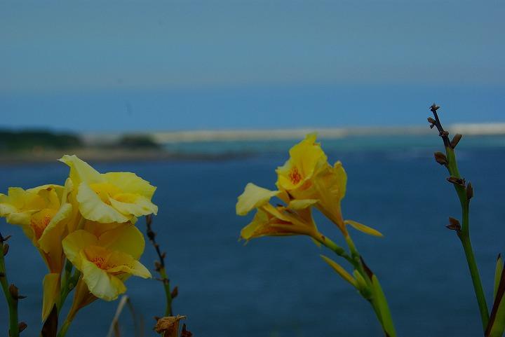 海と花01
