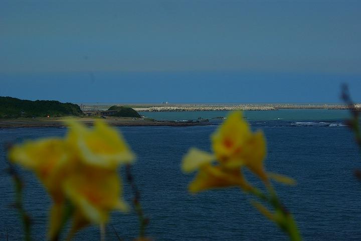 海と花02