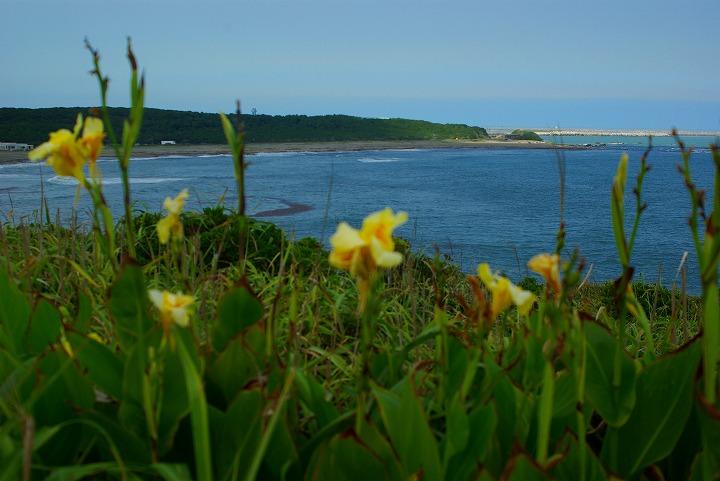 海と花03