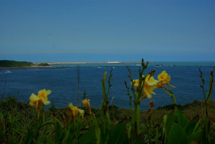 海と花04