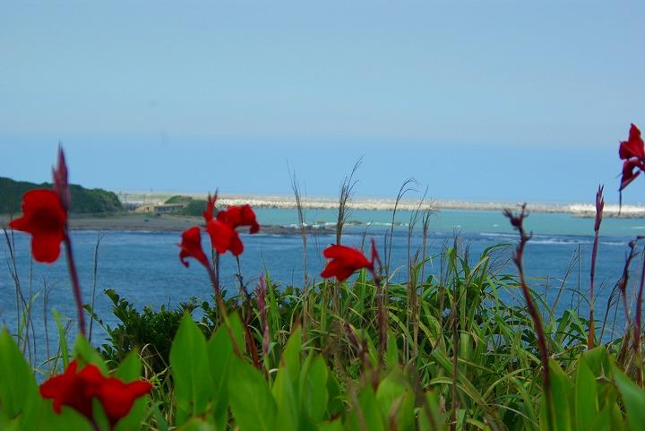 海と花06