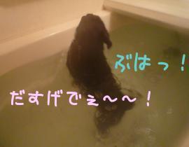 4_GnmMzN.jpg
