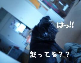 SH4z_roC.jpg