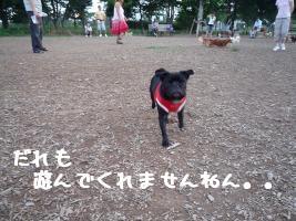 fVdom7Zu.jpg