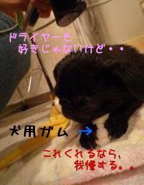 m_pXjoA6.jpg