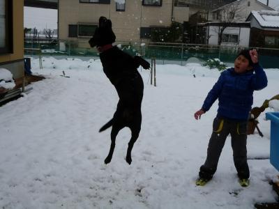 番犬と遊ぶ